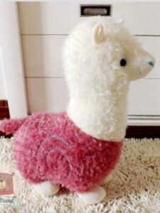 Cừu Bông Hàn Quốc