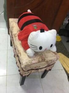 Mèo Kitty cánh ong